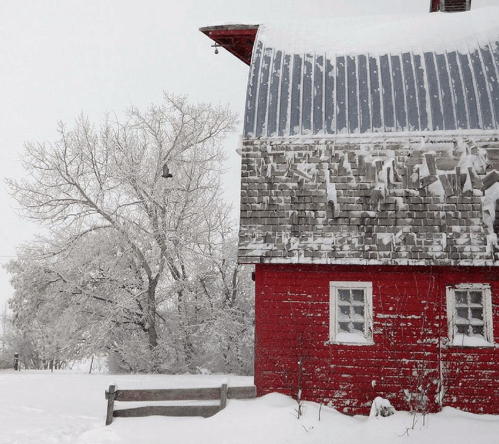 Winter Shed (1)