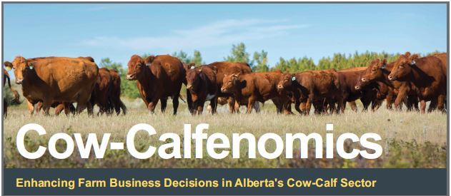 cow calfenomics